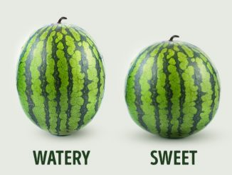 5 Key Tips To Pick The Perfect Watermelon