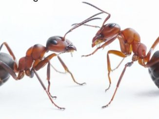 Breathtaking! You Will Never See An Ant In Your Home Thanks, To This Powerful Natural Tip !